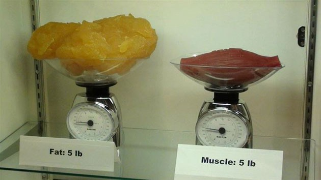 Five-pounds-of-fat-compared-to-five-pounds-of-muscle